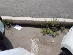 Erbacce e carte nella piazza dell'ufficio postale di Scacciapensieri