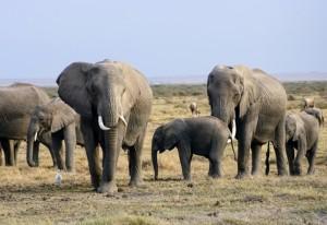 elephants-2999674_960_720-fileminimizer